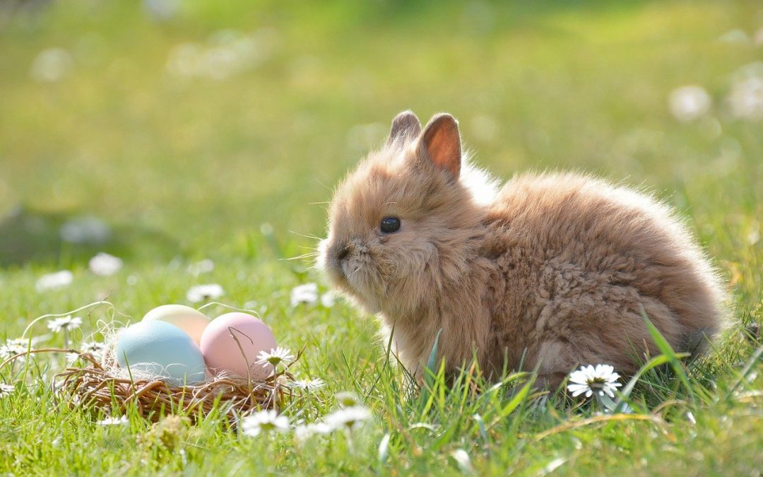 How to get through Easter whilst isolating at home